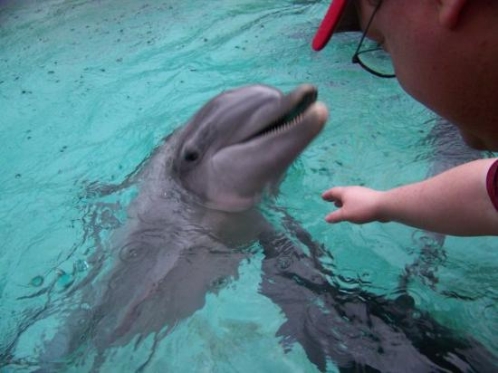 Orlando, FL: Me petting the dolphins at Busch Gardens