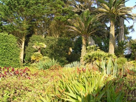 palmen in england der golfstrom machts m glich bild von. Black Bedroom Furniture Sets. Home Design Ideas