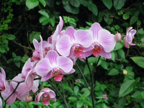 Science Park (Parque de las Ciencias): pretty orchids