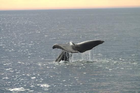 Анденес, Норвегия: Sperm whale diving (picture from lower deck to get horizon)