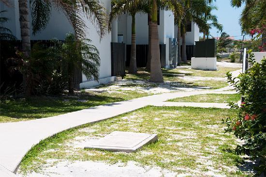"""Las Terrazas Resort: Lawn and """"garden"""" did not look too good"""