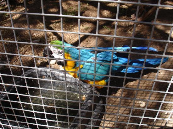 Austin Zoo: macaw