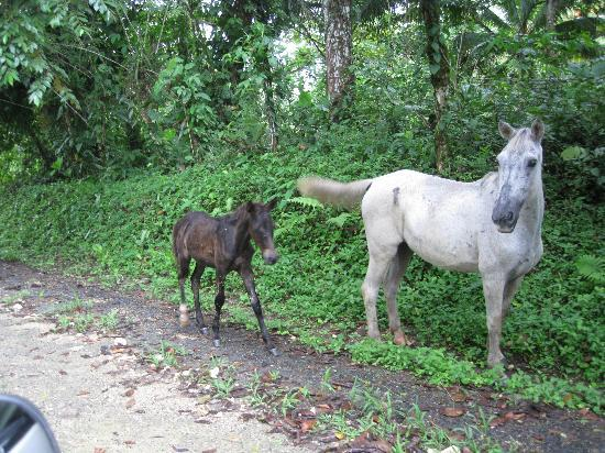 Bluff Beach Retreat: momma horse and baby horse