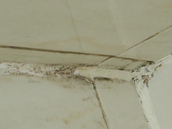 Nayland Hotel: Fungus in shower