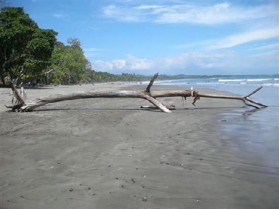 Mermaid Photograph - La Sirena Esterillos Oeste Costa Rica by Michelle  Wiarda-Constantine