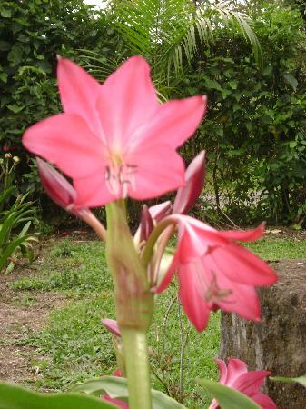Turrialba, Costa Rica: Flora & Fauna Silvestre