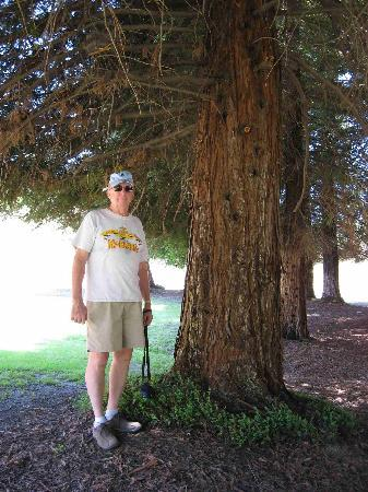 Carbon Canyon Park: A young redwood, but already impressive!