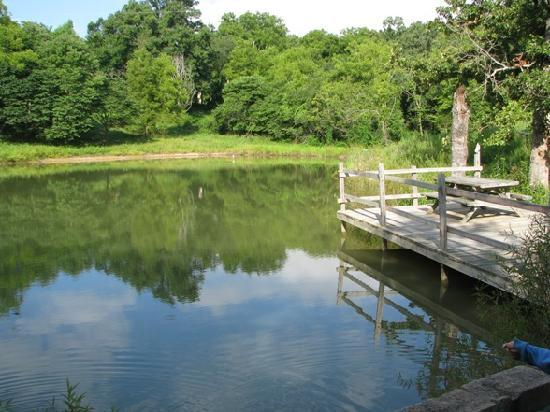 Mansfield Woods: The pond and the dock.