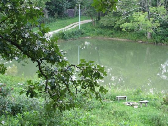 Mansfield Woods: View of the pond