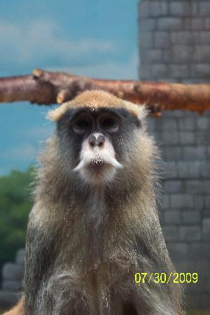 Granby, Kanada: My favorite monkey!