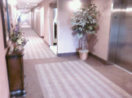 Homewood Suites by Hilton Indianapolis Northwest : Hall by elevator