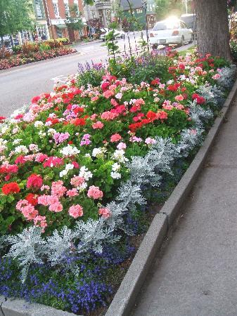 Butler Creek Hot Tubs and Suites Bed and Breakfast: Amazing flowers Niagara on the Lake