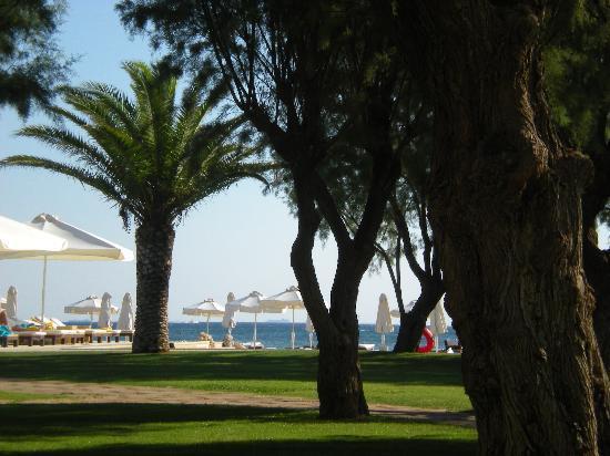 Plaza Resort Hotel: jardin