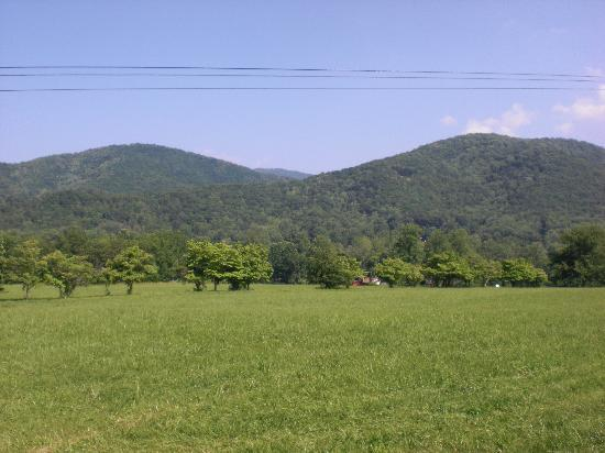 Candler, NC: View from the back of my horse