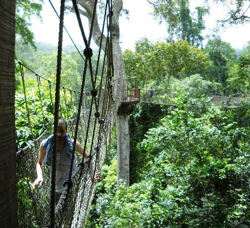 The Almond Tree Guest House: Kakum canopy walk