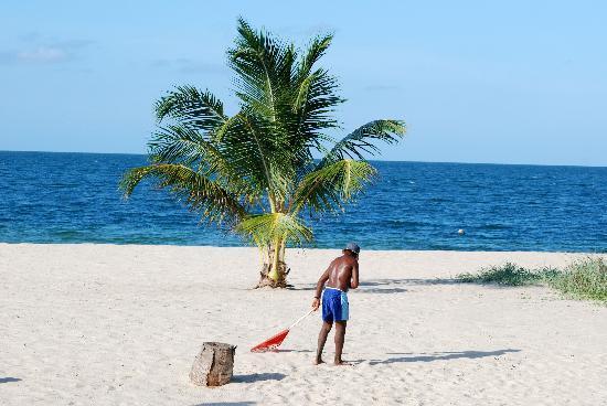 """Mirasol Beach Apartment: Raking the beach ~~ & the """"shady palm"""""""