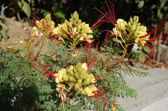 Unusual flowers in kos picture of alice springs hotel kos town alice springs hotel unusual flowers in kos mightylinksfo