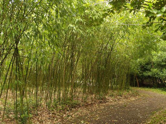 Bamboo Women Bamboo Single Women Bamboo Girls Bamboo Single Girls