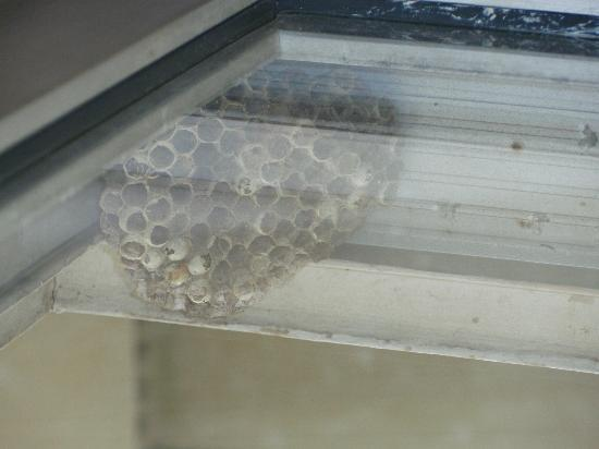 Waterford Estates Lodge: wasp nest provides company if you want to go on balcony.