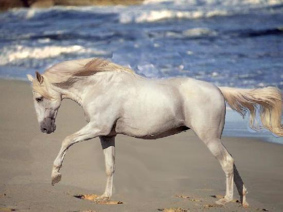King Solomon Hotel: possibilite de faire du cheval sur la plage