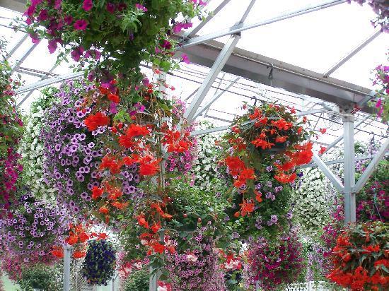 Glacier Gardens Rainforest Adventure: baskets in greenhouse