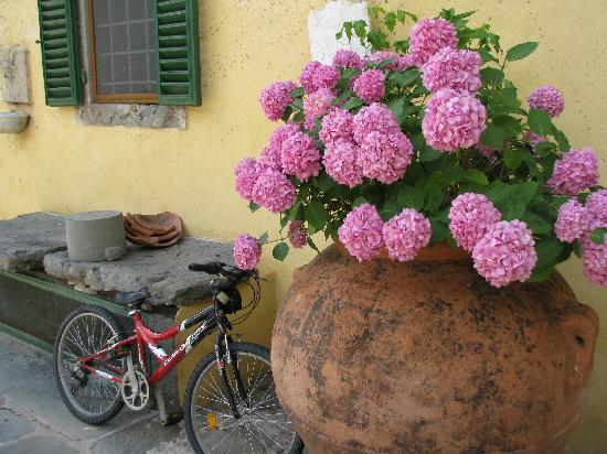 Villa Rigacci: Flowers in bloom outside main entrance