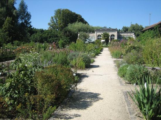 Basel, Schweiz: Medicinal Botanical Garden