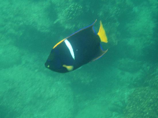 Cabo Pulmo Marine Preserve: LF2