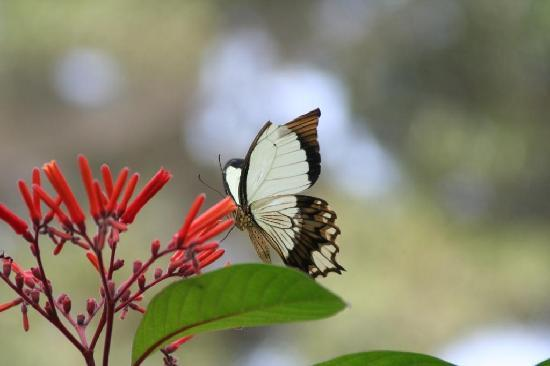 Neptune Pwani Beach Resort & Spa: butterfly center 1