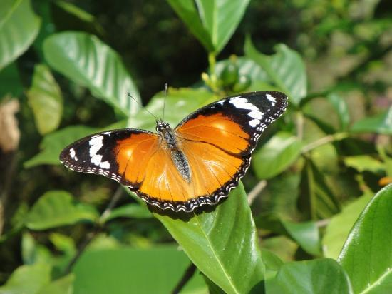 Neptune Pwani Beach Resort & Spa: Butterfly center 2