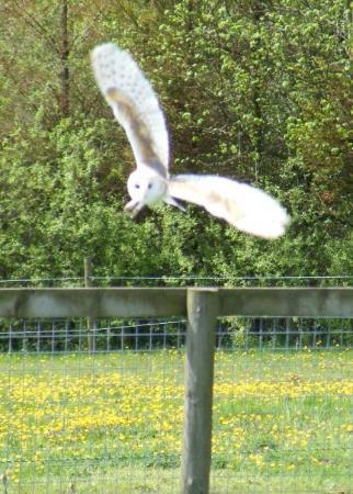 The Lake District Wildlife Park: Arwel the barn owl