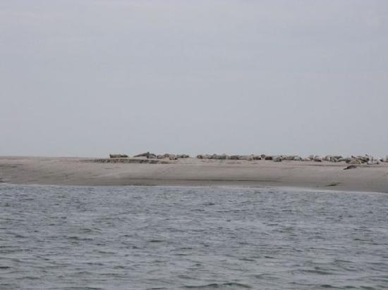Fanoe, Denemarken: The seals we saw
