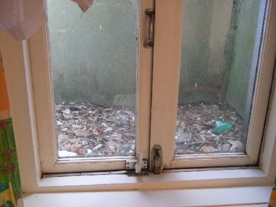 """Hotel Bergen aan Zee : Blick aus SZ-""""Fenster"""""""