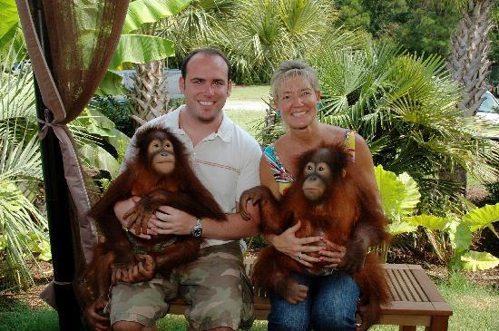 T I G E R S Preservation Station Orangutans