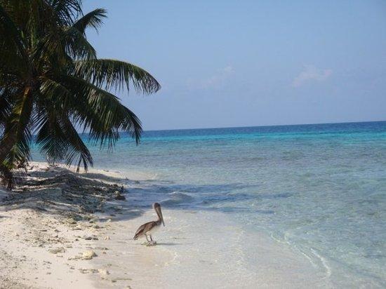 Laughing Bird Caye National Park: Laughing Bird Caye, Placencia, Belize