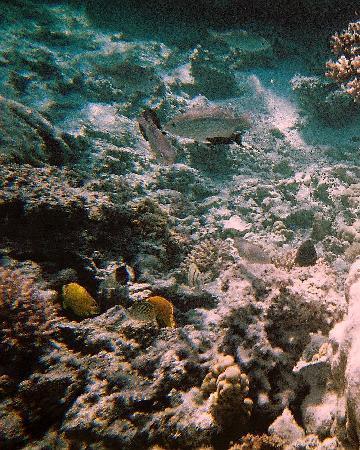 Arorangi Beach Front Bungalow & Studio Unit: Snorkelling in Aitutaki Lagoon