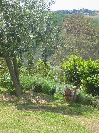 Agriturismo Poggio Pistolese: Poggio Pistolese - View towards olive grove