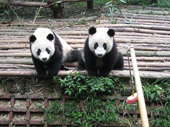Чэнду, Китай: Chengdu Panda Keeper Program