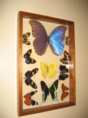 Jasmine House: Butterfly Art