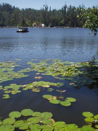 Кодайканал, Индия: Lake in kodaikanal
