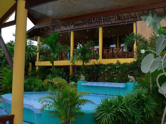 Old Tree's House: piscine