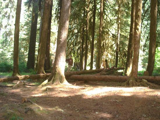 Sol Duc Campground: campsite