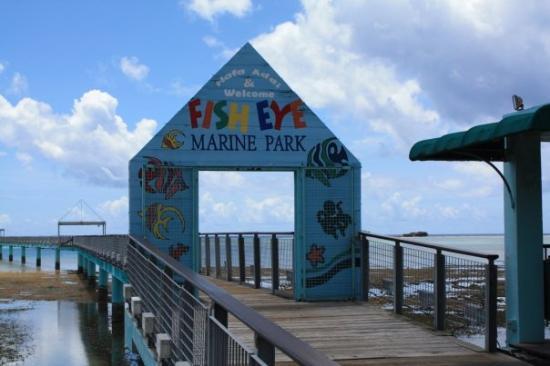 Fish Eye Marine Park: fish eye 我要潛水了哦,變黑的點