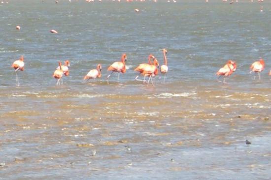 Mexico Beach ภาพถ่าย