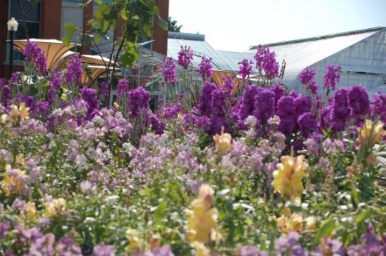 Jardin botanique de montr al univers asiatique picture for Jardin botanique 78