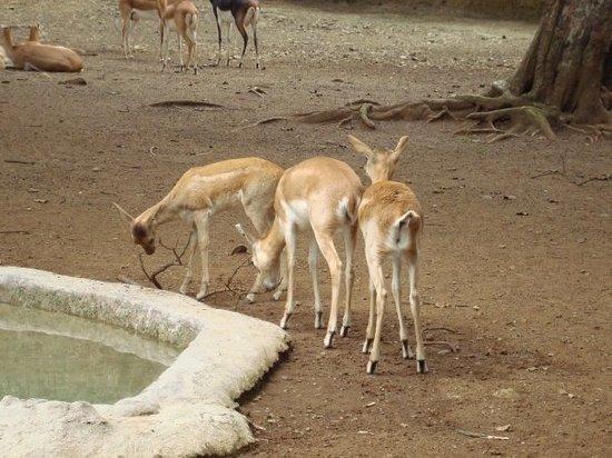 Zoologico de Cali