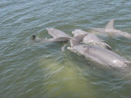 Dolphin Magic: I love my dolphins