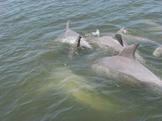 Dolphin Magic: So pretty