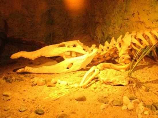 Zoológico Regional de Chiapas Miguel Álvarez del Toro: Alligator con hambre