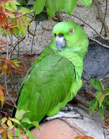 Posada San Sebastian: and Lorenzo when he finally flew up to visit